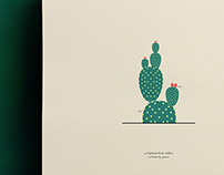 Cactus // Illustration
