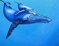 Humpback Whales Illustration