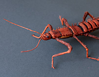 Thorny Devil Paper Insect
