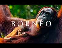 BORNEO 4k Cinematic