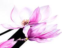 M for Magnolia
