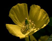 tutti i toni del giallo (III)