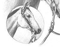 Pferd - Bleistiftzeichnung