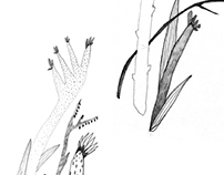 Imaginary Botany||воображаемая ботаника