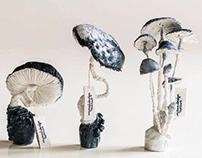 My white-black mushrooms......