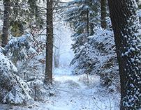 The winter.