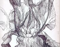 Iris ballpoint pen