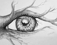 The Bird's Eye View