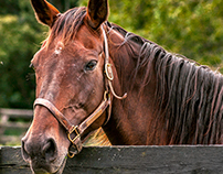 Horse Park - Lexington- Kentucky