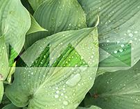 Adobe MAX JP -Leaf-