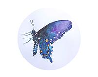 蝴蝶/Butterfly