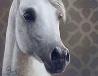 Cinderella Horse