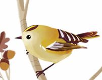 Italian Birds