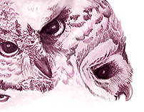 Illustration of owls