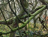 Wet Woodland #2