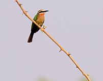 Co Zambie oiseaux