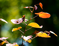 Summer Turns To Autumn