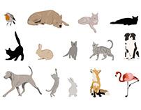 Animal Illustration Bundle1
