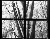 Contact Sheets/Negative Collage