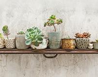 Marina Stímolo | Verde Cactus