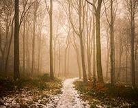 Woodland Wonders #2
