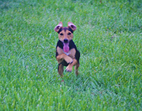 25/4/2015 Pet Portraits
