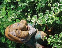 Il giardino rampante
