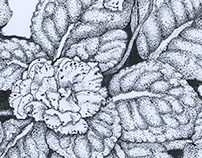 Botanical Pen Art