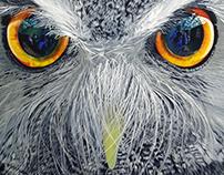 White-Faced Scops Owl - 2016