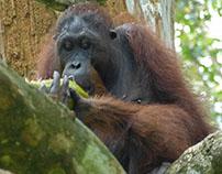 Borneo 2016