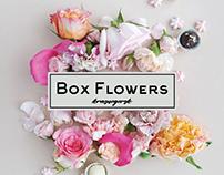 Box Flowers / Identity