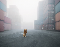 GROSSSTADTLOEWE /  BIG CITY LION