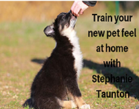 Tips for train your new pet feel at home