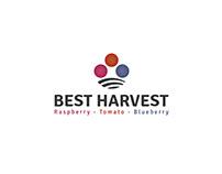 Best Harvest - Identity