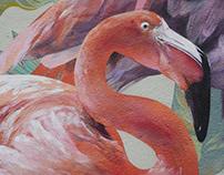 Moscow Zoo Flamingo Lovebirds