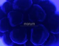 MORUM