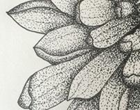 Pointillism Chrysanthemum