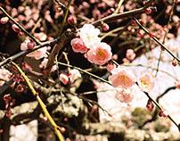 Fotografías Japón
