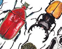 Insectos del mundo