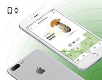 CAP&STALK - App | UX/UI