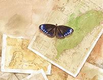 斯氏紫斑蝶的傳說-繪本插畫 /作者:廖金山
