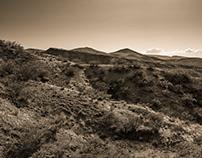 Hatch Valley NM Landscapes