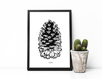 Giant pinecone