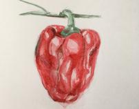 mmxviii. watercolor practice