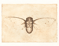 Empress Cicada Etching