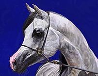 Fluke Cavallo Arabo