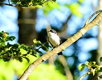 Djur och fågelliv