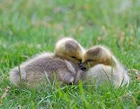 Precious little ones