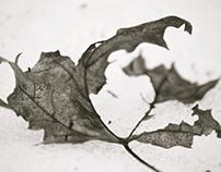 Old Leaves #2