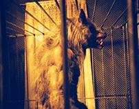 Werewolf George